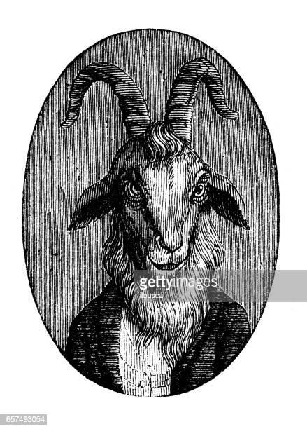 humanized animals illustrations: portrait of goat - goat stock illustrations