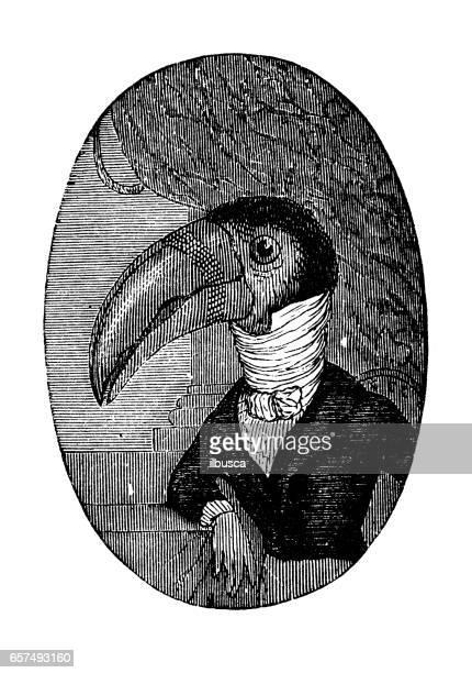 humanized animals illustrations: portrait of toucan - alternative pose stock illustrations