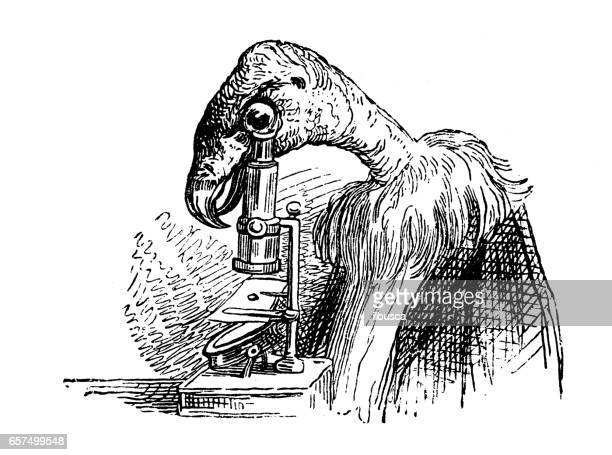 Humanized animals illustrations: Vulture with microscope