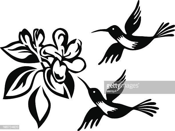 humming birds and honeysuckle - arrowwood stock illustrations, clip art, cartoons, & icons
