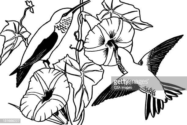 hummingbird - vine stock illustrations