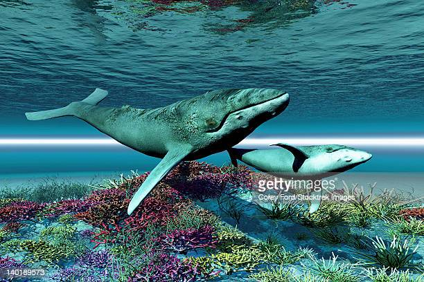 humpback whale mother and calf swim over a colorful coral reef. - humpback whale stock illustrations, clip art, cartoons, & icons