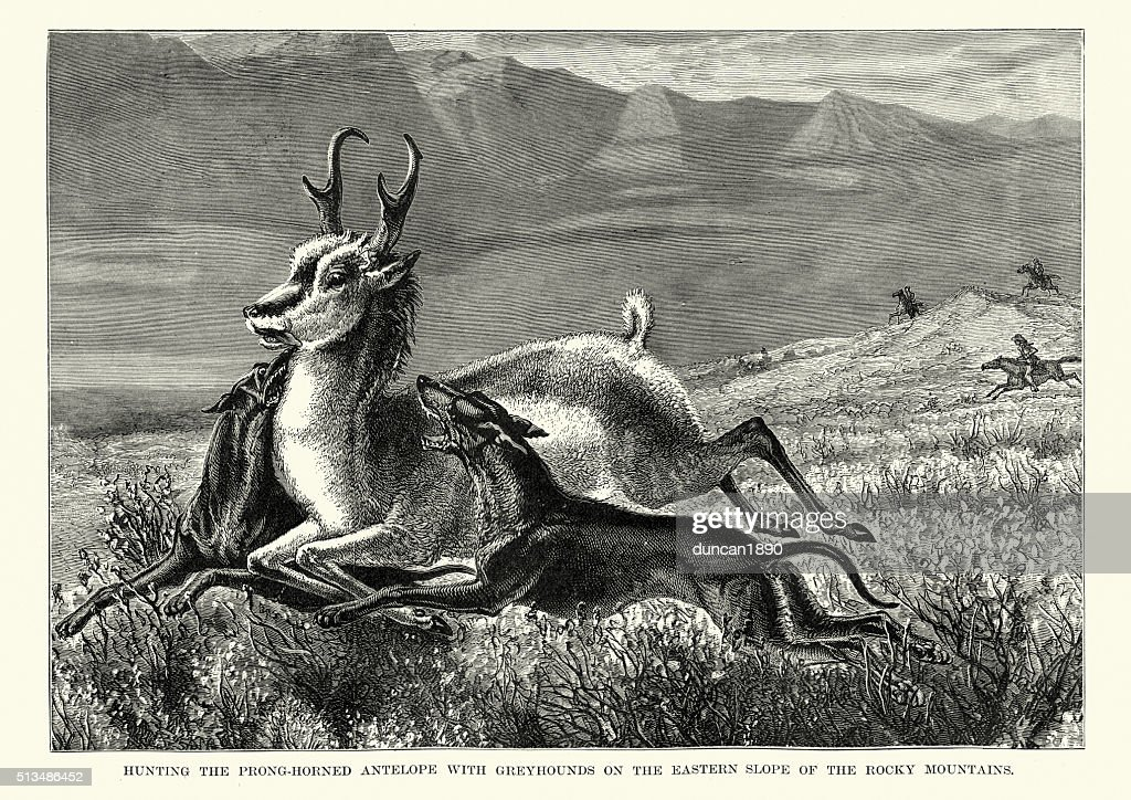 Hunting antelope with greyhounds, Rocky Mountains : stock illustration