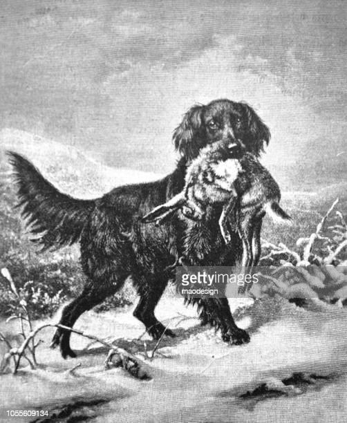 illustrations, cliparts, dessins animés et icônes de chien de chasse est titulaire d'un lièvre chassé dans sa bouche - 1888 - chasseur