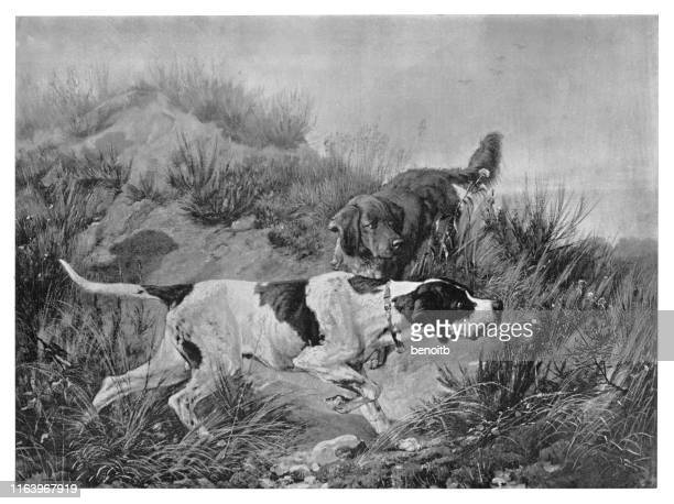 hunting dogs - pointer dog stock illustrations