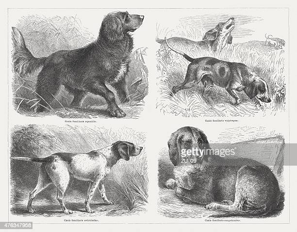 hunting dogs, wood engravings, published in 1876 - hunting dog stock illustrations