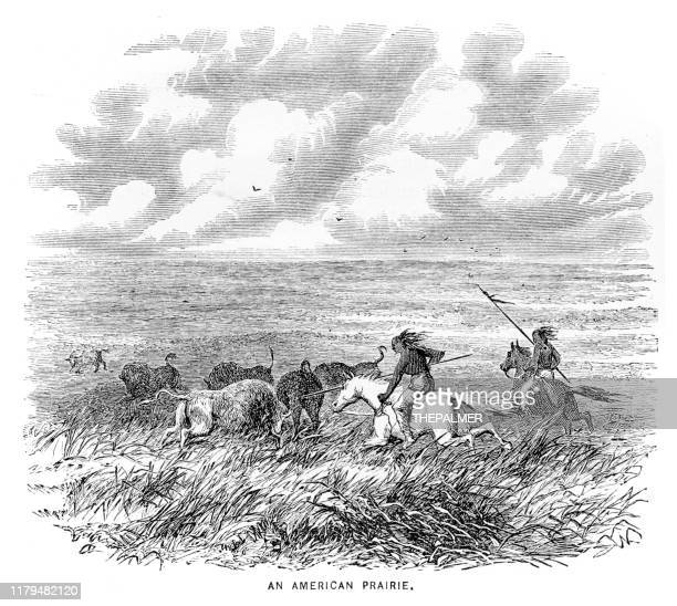 hunting in the american prairie engraving 1881 - animals hunting stock illustrations