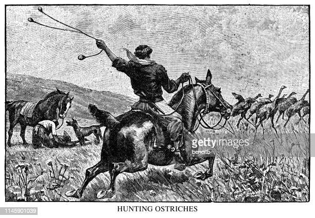 hunting ostriches - ostrich stock illustrations, clip art, cartoons, & icons
