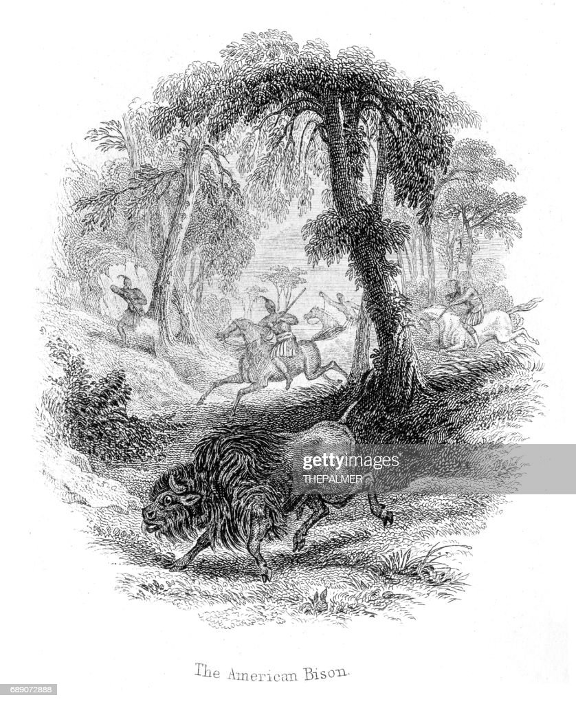 Hunting the american bison lithograph 1884 : Stock Illustration