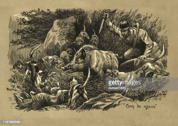 hunting wild boar with dogs, hunter stabbing boar, victorian - animals hunting stock illustrations