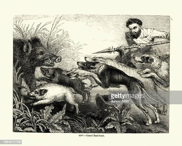 illustrations, cliparts, dessins animés et icônes de chasse sanglier avec lance et chiens - lance
