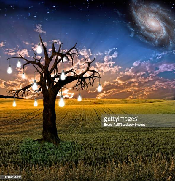 ilustraciones, imágenes clip art, dibujos animados e iconos de stock de idea tree landscape. light bulbs represents ideas - galaxia espiral