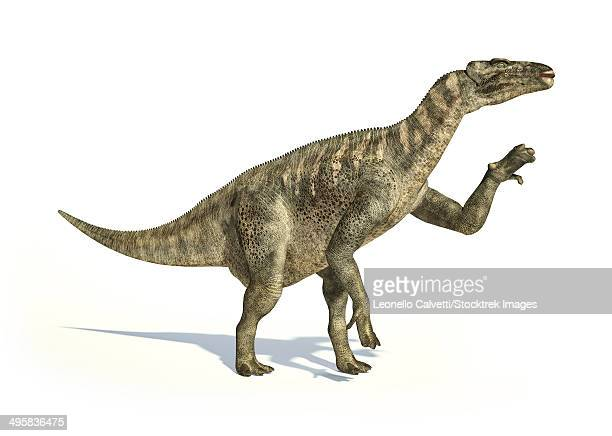 iguanodon dinosaur in dynamic posture, on white background with drop shadow. - hadrosaurid stock illustrations, clip art, cartoons, & icons