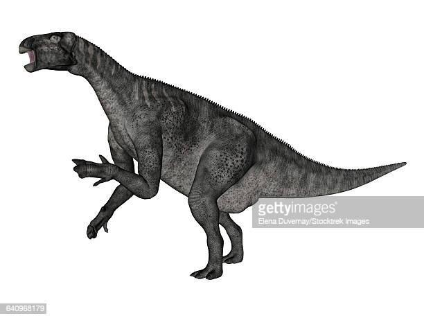 iguanodon dinosaur rearing up, white background. - hadrosaurid stock illustrations, clip art, cartoons, & icons