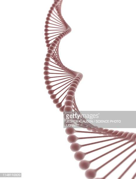 dna, illustration - dna stock illustrations