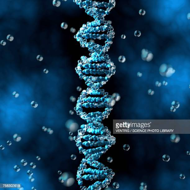 DNA, illustration