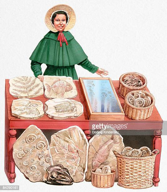 illustration of 19th century paleontologist mary anning with collection of fossils - one mid adult woman only stock illustrations