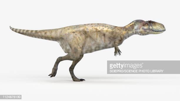 Illustration of a abelisaurus