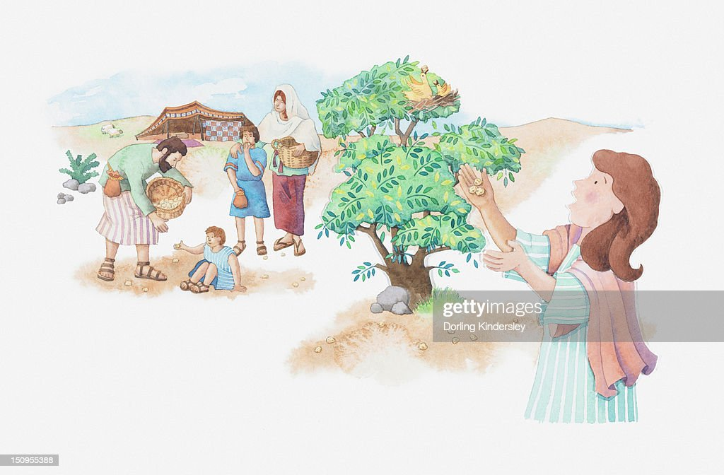 Illustration of a bible scene, Exodus 16, Manna and Quail, God provides meat and bread for the starving Israelites in the desert : stock illustration