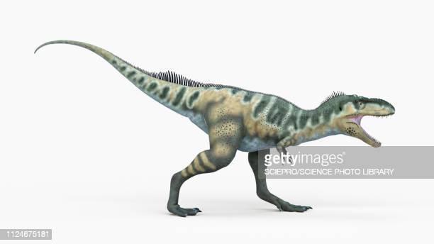 ilustraciones, imágenes clip art, dibujos animados e iconos de stock de illustration of a bistahieverticalersor - animal vertebrado