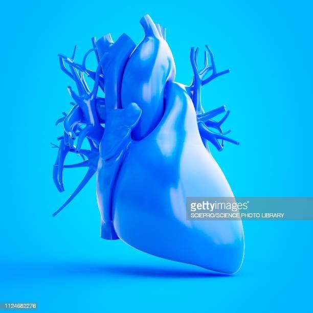 ilustraciones, imágenes clip art, dibujos animados e iconos de stock de illustration of a blue heart - cardiólogo