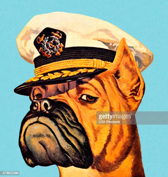 Illustration of a boxer dog wearing a captain's hat