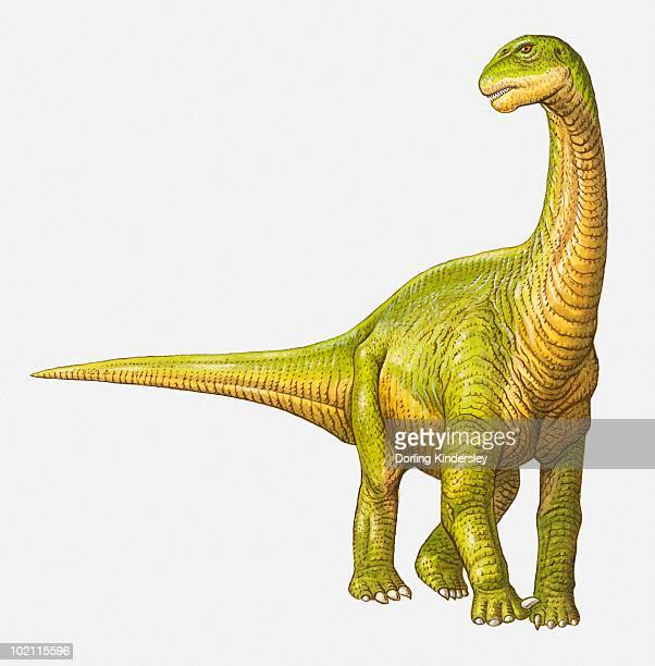 illustration of a camarasaurus, jurassic period - jurassic stock illustrations, clip art, cartoons, & icons