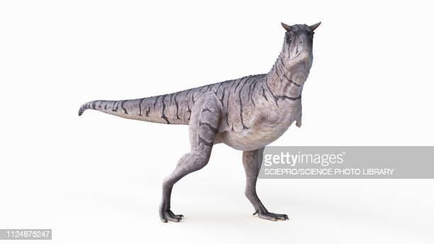 illustration of a carnotaurus - history stock illustrations