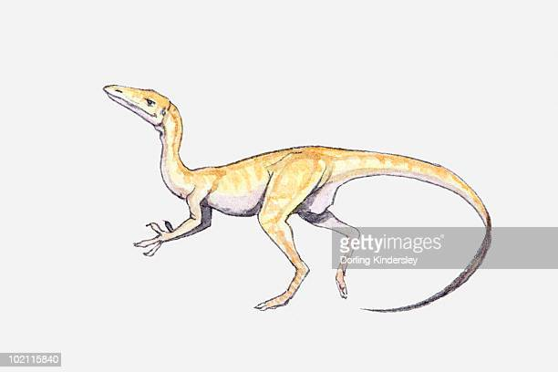 Illustration of a Coelophysis dinosaur, Triassic period
