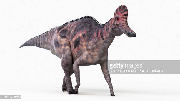 illustration of a corythosaurus - corythosaurus stock illustrations, clip art, cartoons, & icons