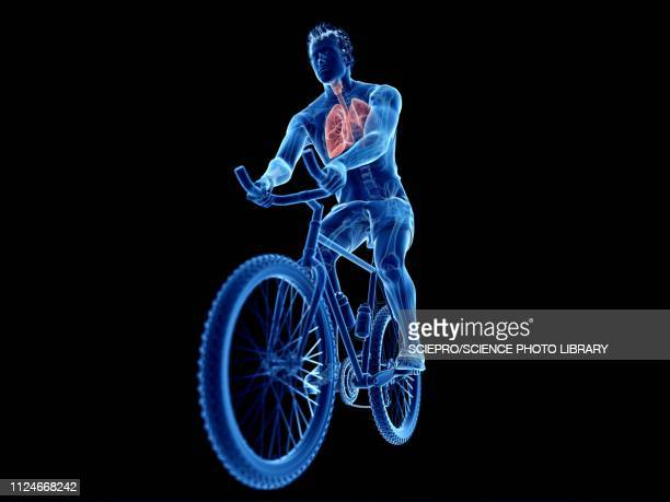 illustration of a cyclist's lung - the human body点のイラスト素材/クリップアート素材/マンガ素材/アイコン素材