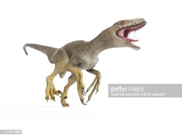 ilustraciones, imágenes clip art, dibujos animados e iconos de stock de illustration of a dakotaraptor - paleontología