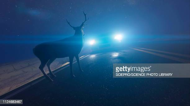 illustration of a deer in front of a car - graphic car accidents stock illustrations