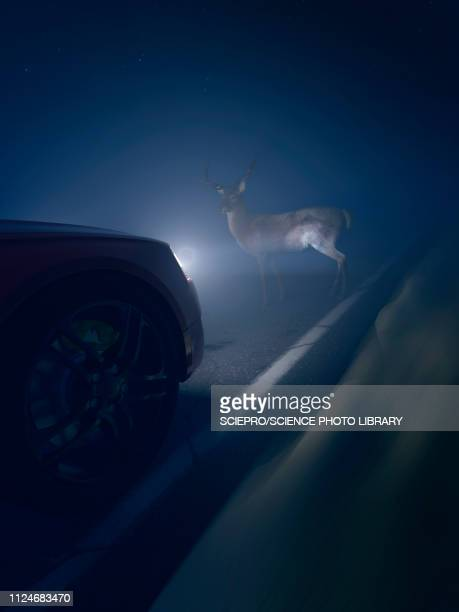 illustration of a deer in front of a car - animal crossing sign stock illustrations