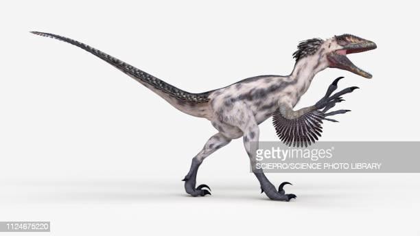 illustration of a deinonychus - theropod stock illustrations