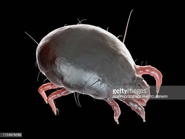 illustration of a dust mite - asthmatic stock illustrations