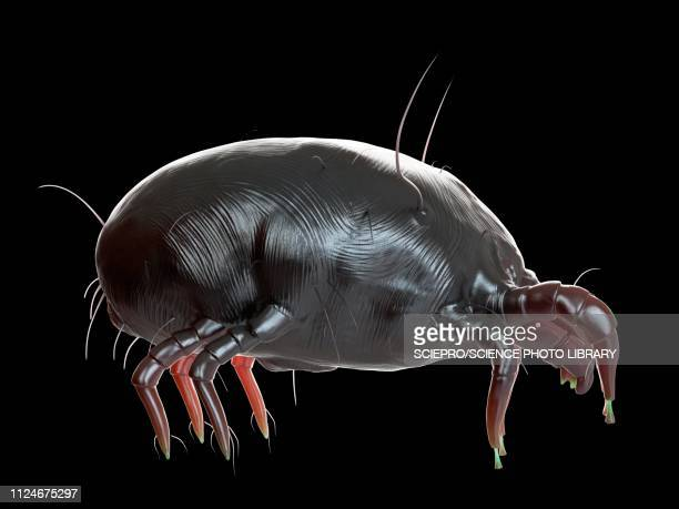 illustration of a dust mite - eczema stock illustrations