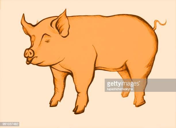 レトロなスタイルで、サングインの描画豚の姿のイラスト