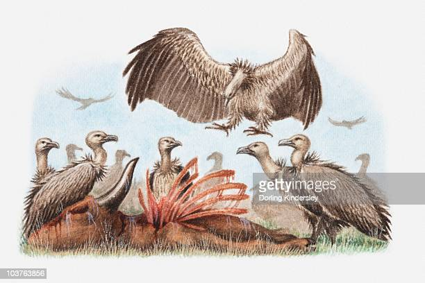 Illustration of a flock of vultures with a carcass