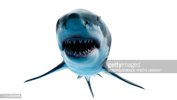 illustration of a great white shark - man made object stock illustrations