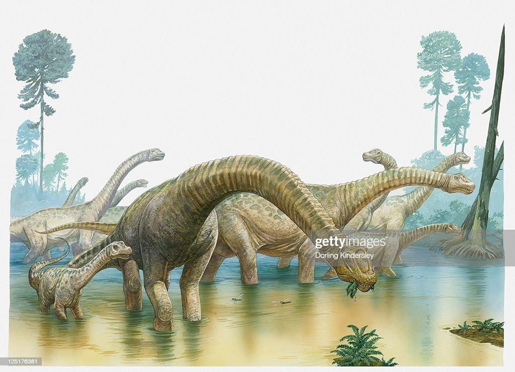 Illustration of a group of sauropod dinosaurs feeding in swampland : Ilustración de stock