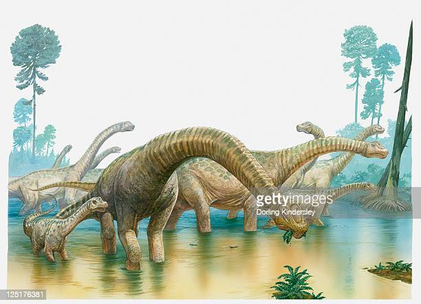 ilustraciones, imágenes clip art, dibujos animados e iconos de stock de illustration of a group of sauropod dinosaurs feeding in swampland - era prehistórica