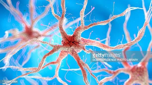 ilustraciones, imágenes clip art, dibujos animados e iconos de stock de illustration of a healthy human nerverticalous cell - cerebral nuclei