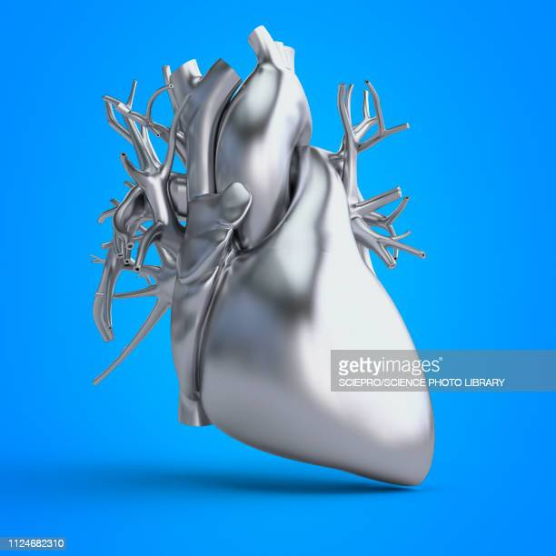 illustration of a heart - myocardium stock illustrations, clip art, cartoons, & icons