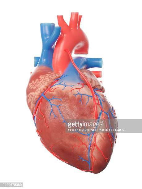 illustration of a heart with a bypass - built structure stock illustrations