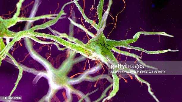 illustration of a human nerverticale cell - dendrite stock illustrations