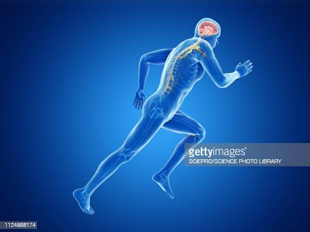 illustration of a jogger's brain - sportsperson stock illustrations