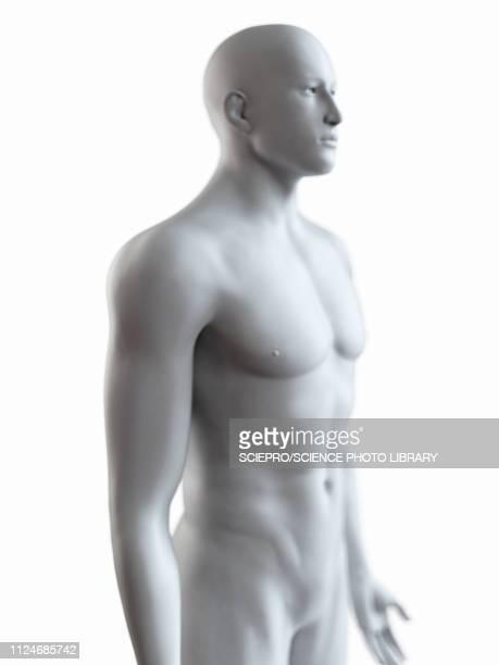 illustration of a male body - the human body点のイラスト素材/クリップアート素材/マンガ素材/アイコン素材