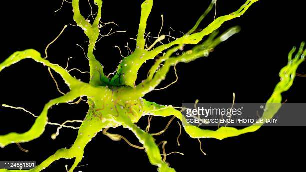 ilustraciones, imágenes clip art, dibujos animados e iconos de stock de illustration of a nerverticale cell - cerebral nuclei