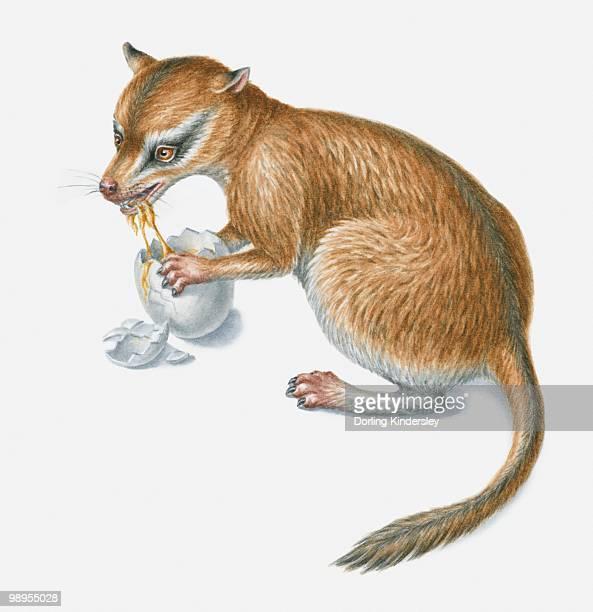 illustration of a prehistoric ominivorous mammal eating a dinosaur's egg - mammal stock illustrations, clip art, cartoons, & icons